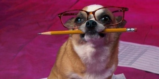 A dog preparing to receive his exams