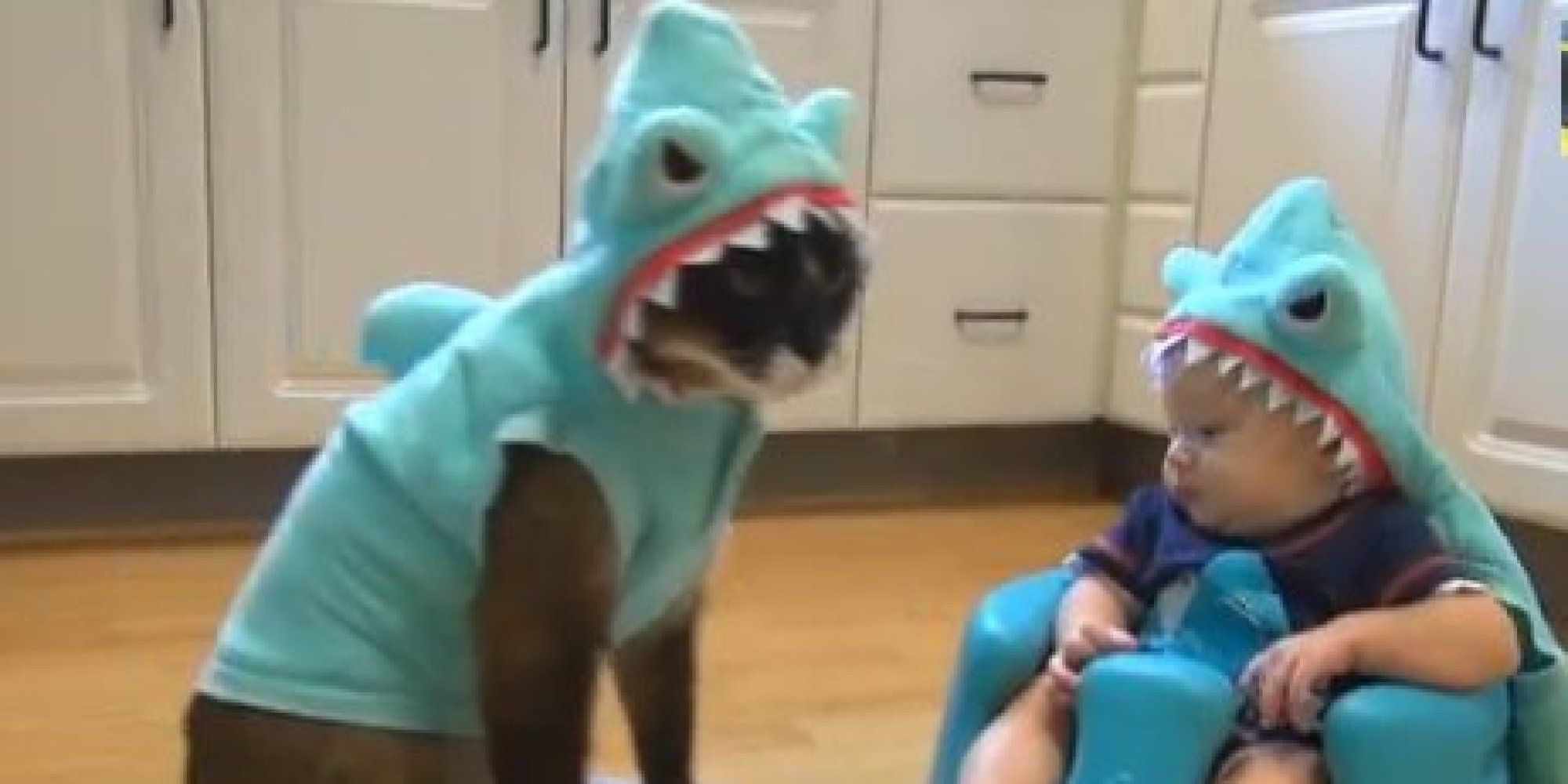 Roomba Riding Shark Cat Faces Off With Baby In Shark
