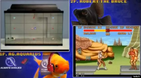 fish plays street fighter