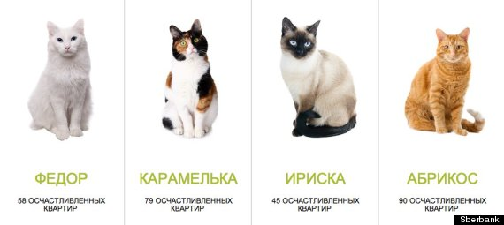 sberbank cat