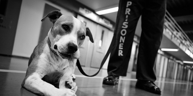 Who Rescued Whom? Shelter Dogs and Prison Inmates Give Each Other a New 'Leash' on Life
