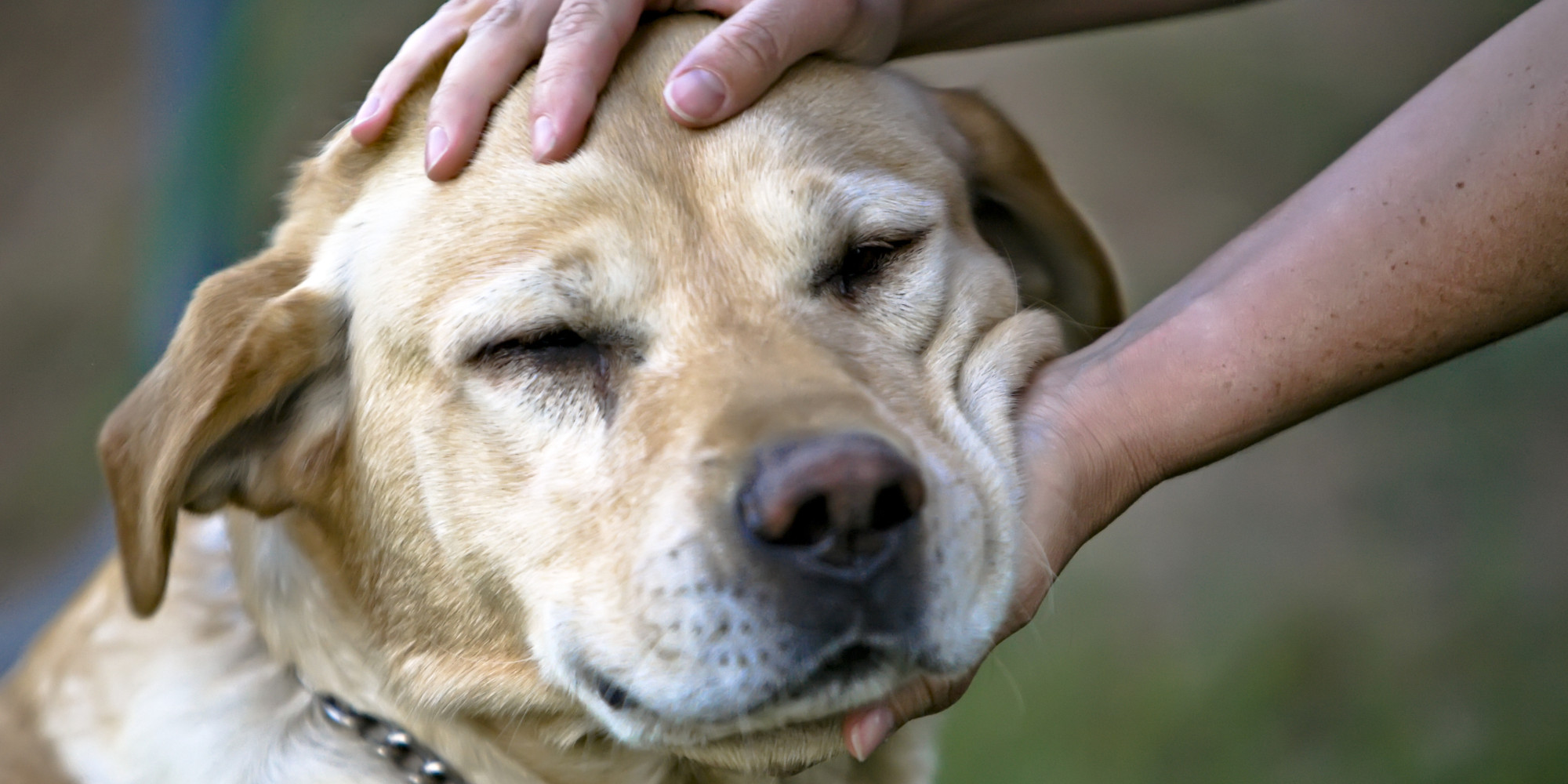 Image result for petting a dog