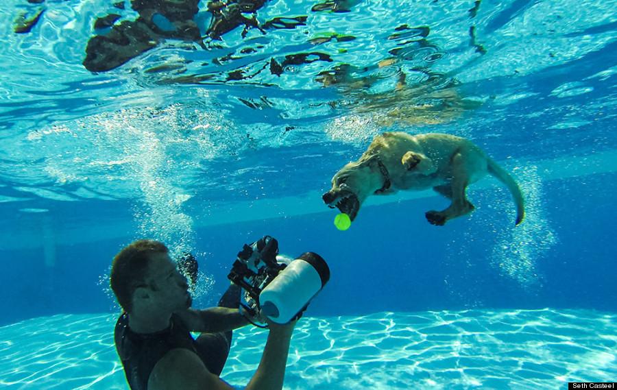 seth casteel underwater puppies