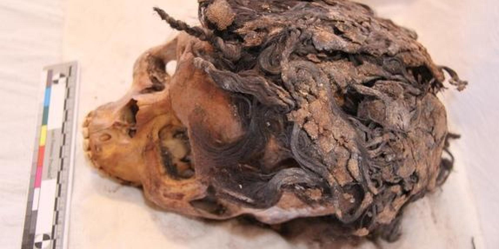 Ancient egyptian hair extensions are 3300 years old huffpost pmusecretfo Images