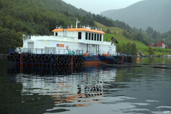 saumon norvege