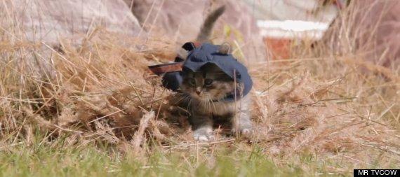 assassins kitten