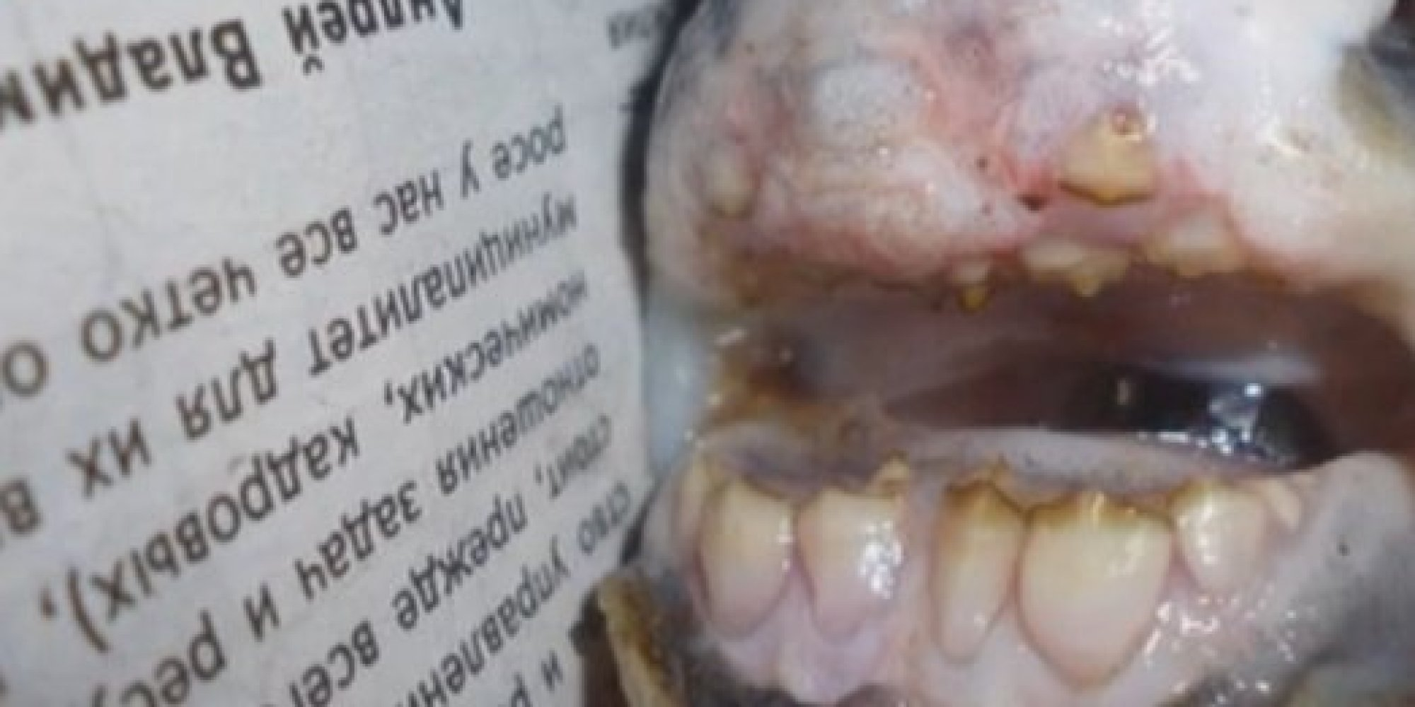 Fish With Human Teeth Caught In Russian River Photo Huffpost