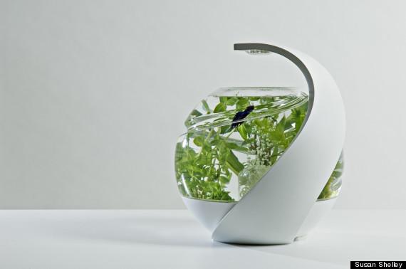 avo fish tank