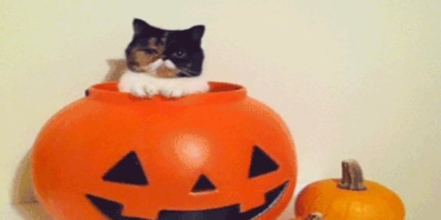 & 21 Amazing GIFs Of Dogs And Cats In Halloween Costumes
