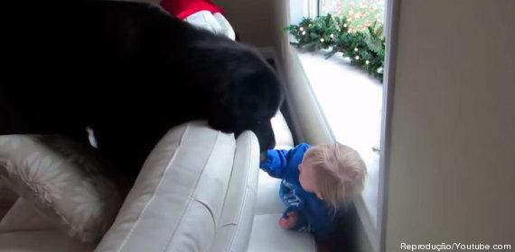 garotinha cachorro