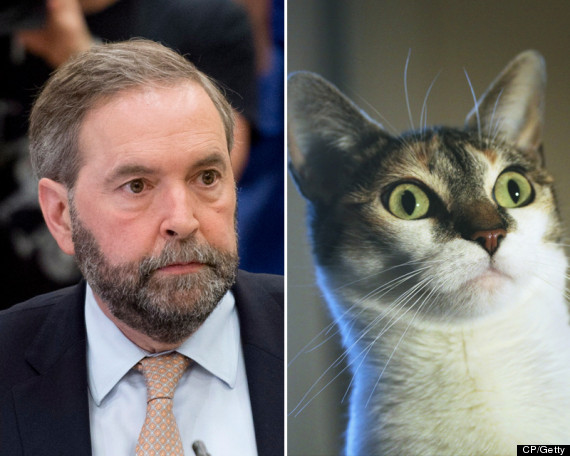mulcair cat