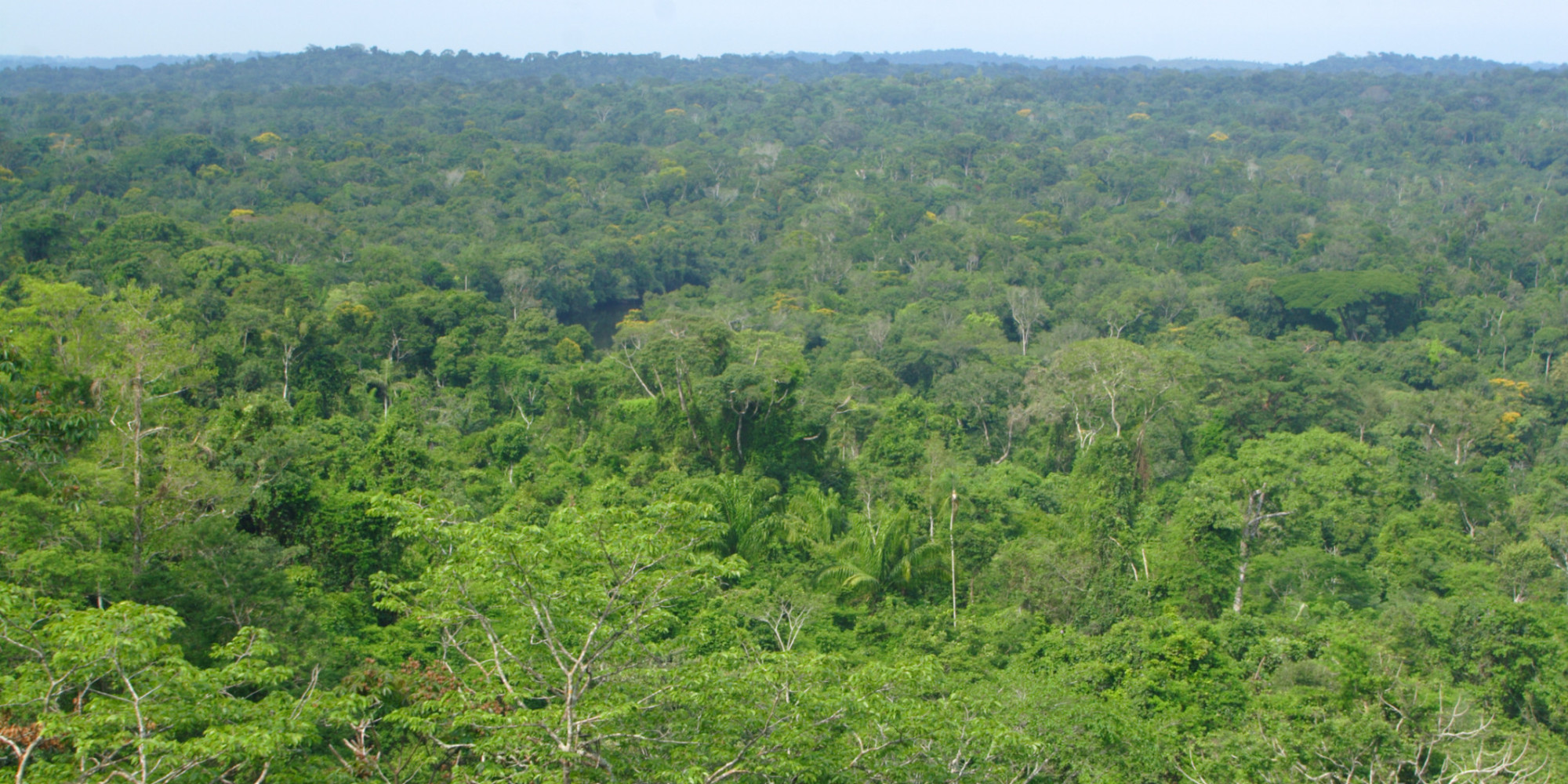 environment concerns conflicts in the rainforest Environment or human rights  mining in the philippines – concerns and conflicts  reading the mining in the philippines - concerns and conflicts, fact.