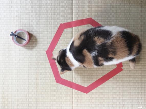 cat circle2
