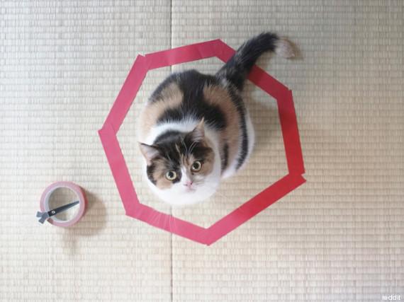 cat circle 3
