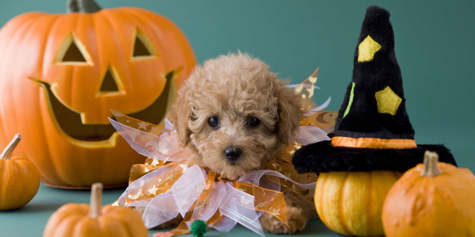Halloween From Your Dog S Perspective Huffpost