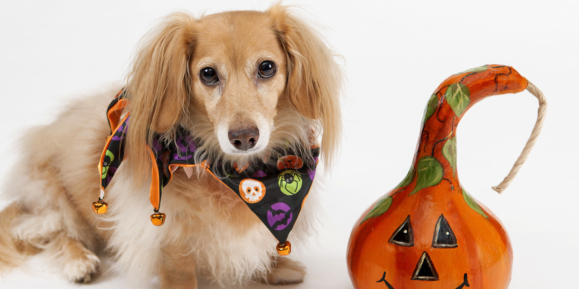 Halloween Can Be Dangerous -- For Your Pet