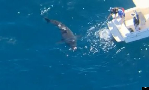 harrison williams on dead whale