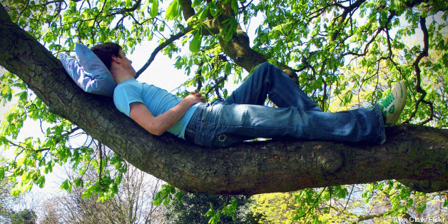 summer sleep tree