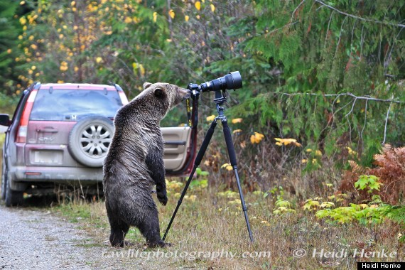 grizzly bear camera