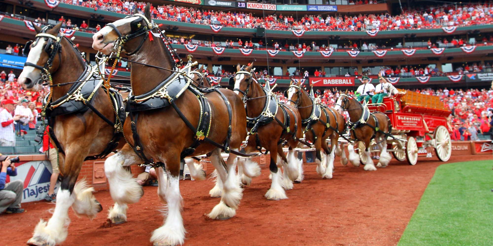 Budweiser cans clydesdales for edm zombies and jay z huffpost aloadofball Choice Image
