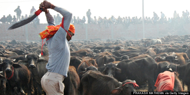 india gadhimai