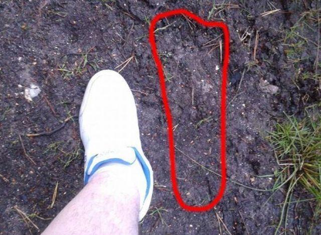 bigfoot uk sasquatch