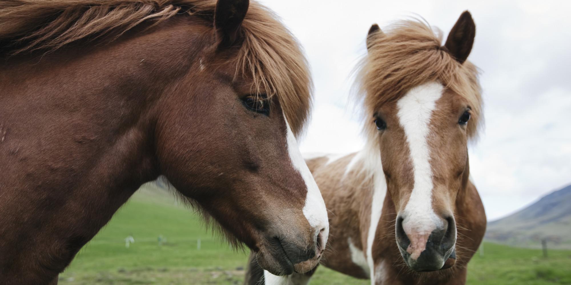 Behavior Similarities Among Wild vs. Domestic Horses