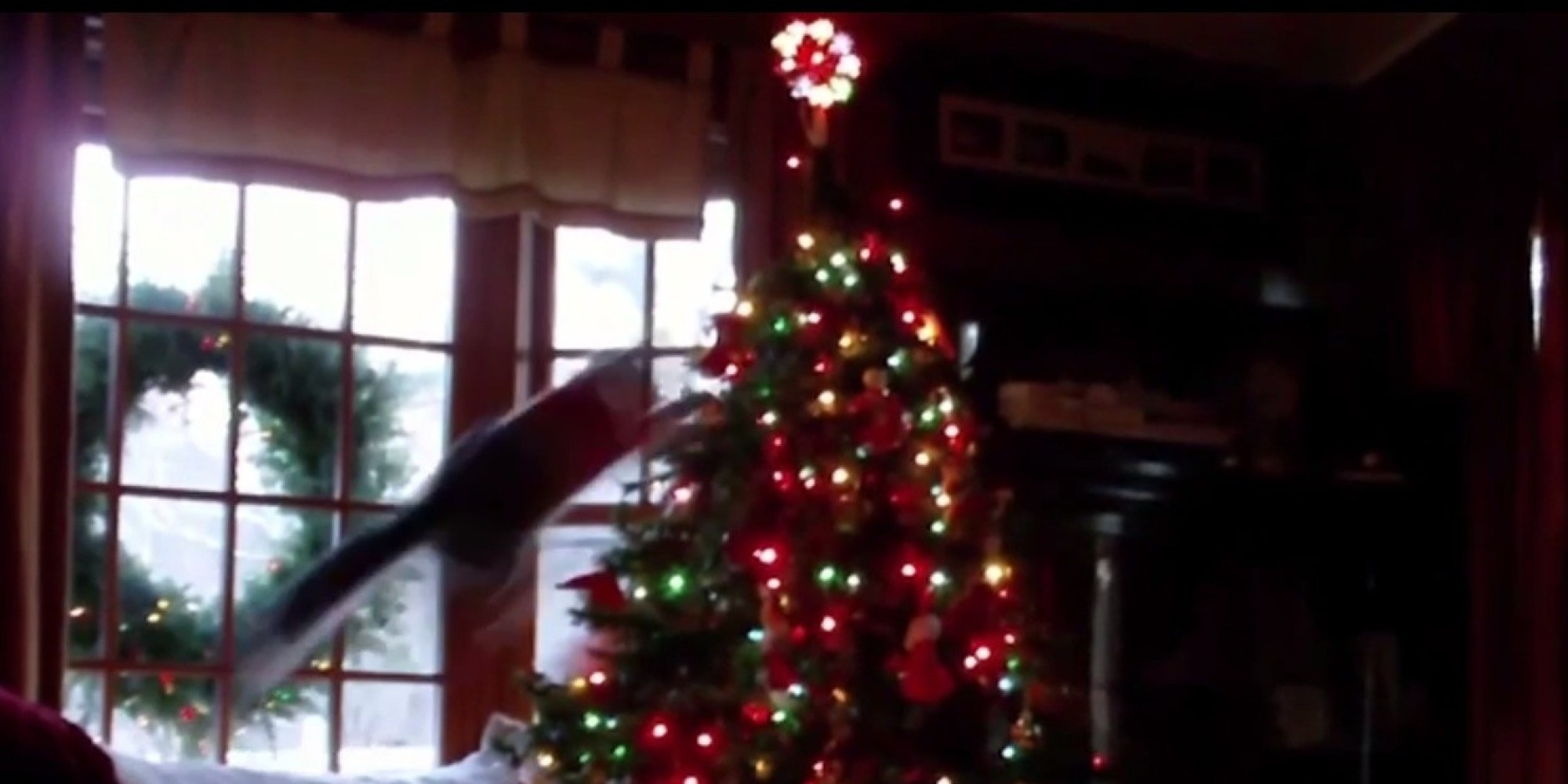 Cats vs. Christmas Trees Shows Felines At Their Yuletide Worst ...