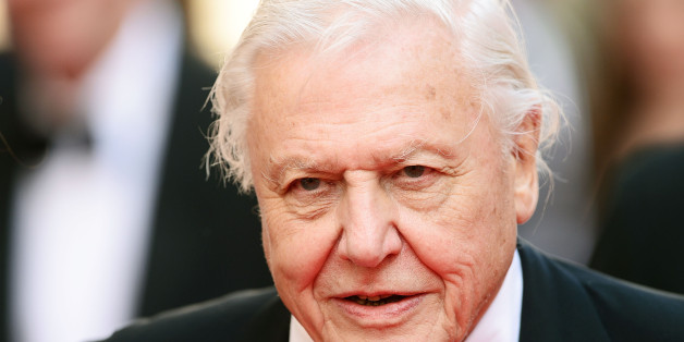 LONDON, ENGLAND - MAY 18:  Sir David Attenborough attends the Arqiva British Academy Television Awards at Theatre Royal on May 18, 2014 in London, England.  (Photo by Dave J Hogan/Getty Images)