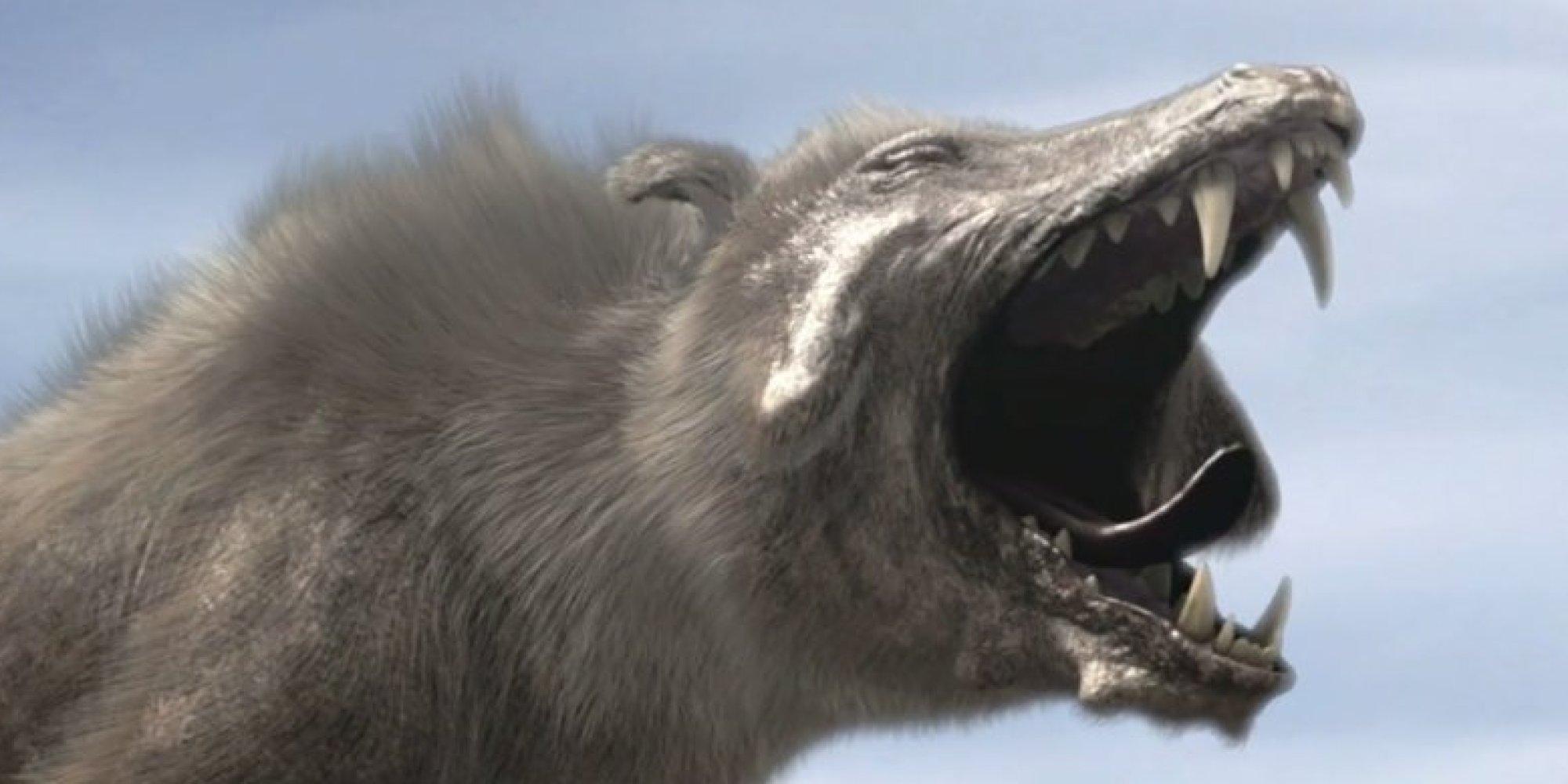 How Big Were Prehistoric Dogs