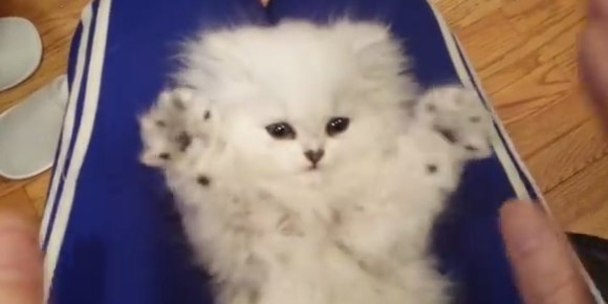 Tiny Fuzzy Kitten Mimics Its Human s Gestures Is Cutest Copycat