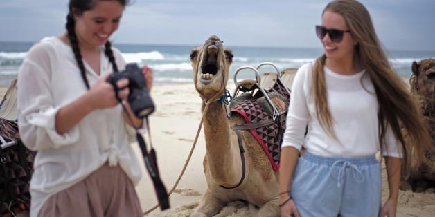 Ce chameau a bien fait rire les internautes