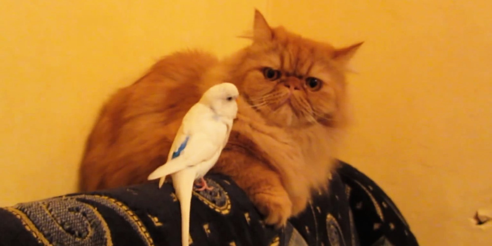 Heres Proof That Birds Just Desperately Want To Be Friends With - Dogs annoying cats with friendship