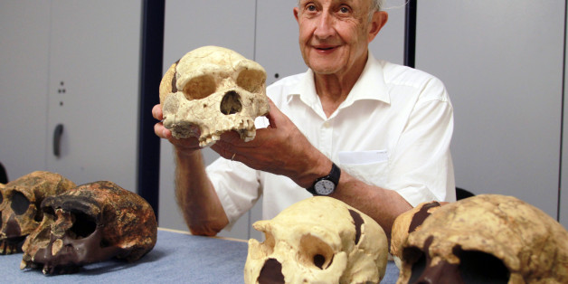 French paleontologist Henri  De Lumley shows a skull uncovered in 1971 at the prehistoric site of Caune de l'Arago in Tautavel on July 16, 2013. Forty years after the discovery of the Man of Tautavel, homo erectus tautavelensis, the Caune de l'Arago still provides a wealth of clues for researchers, who in 2011 discoverd a baby tooth, suggesting Homo heidelbergensis, probably the ancestor of Homo sapiens in Africa and the Neanderthals in Europe, led a family life in the cave.   AFP  PHOTO / RAYMO