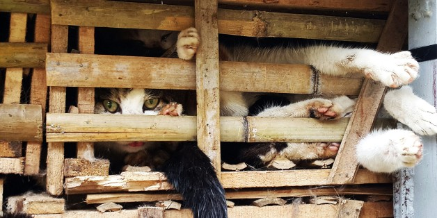 This picture taken on January 27, 2015 shows seized cages of live cats transported in a truck in Hanoi. Thousands of live cats destined 'for consumption' have been seized in Hanoi after being smuggled from China, police said on January 29, but their fate still hangs in the balance. AFP PHOTO        (Photo credit should read STR/AFP/Getty Images)