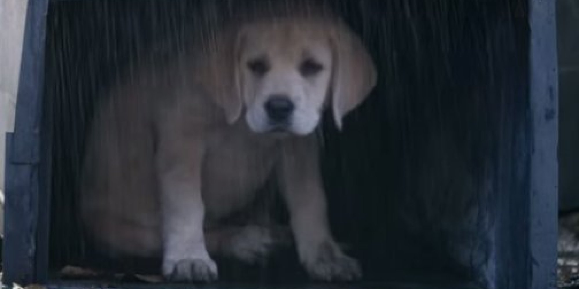 Budweisers super bowl 2015 puppy commercial is too adorable to budweisers super bowl 2015 puppy commercial is too adorable to handle huffpost aloadofball Images