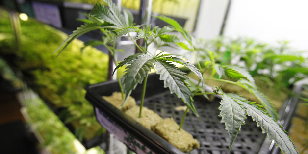 Justice Department Continues To Crack Down On Medical Marijuana In California