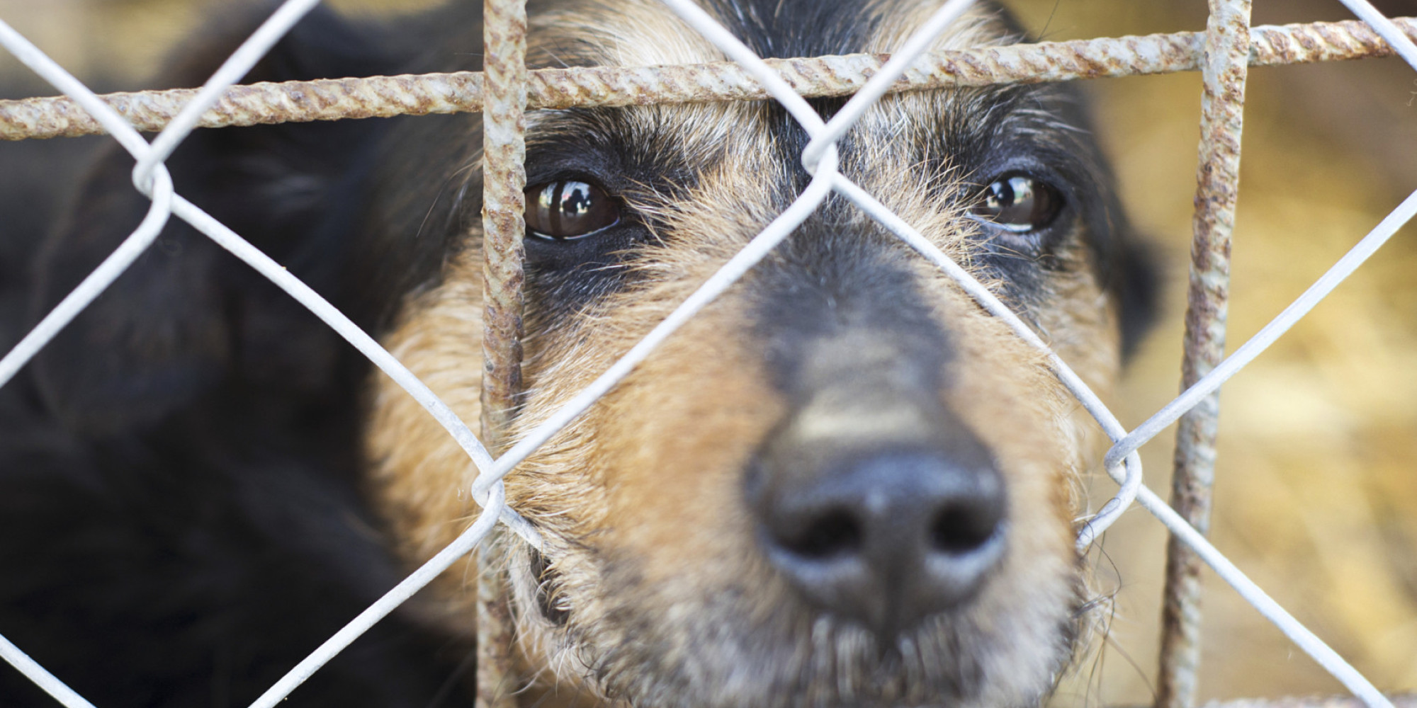 peta euthanized a lot of animals at its shelter in 2014 and no