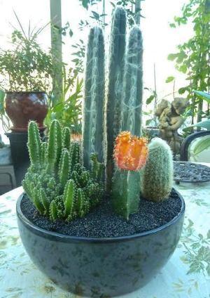 envie d 39 exotisme voici comment cultiver cactus et plantes grasses huffpost qu bec. Black Bedroom Furniture Sets. Home Design Ideas