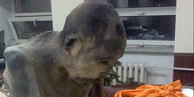 """Ce moine momifié de 200 ans serait en """"méditation très profonde"""""""