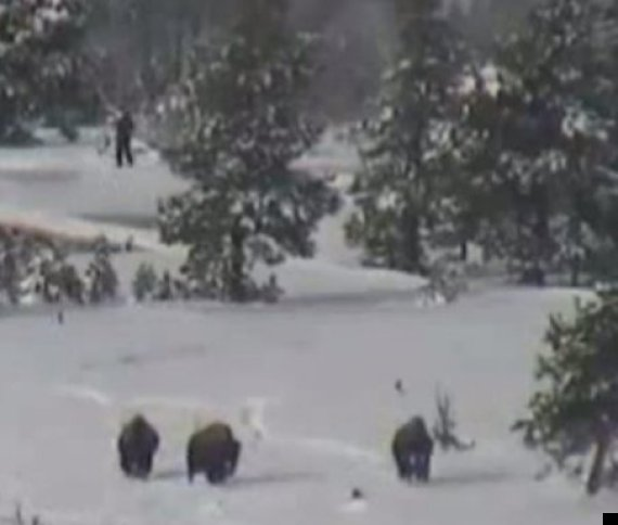 bigfoot in yellowstone