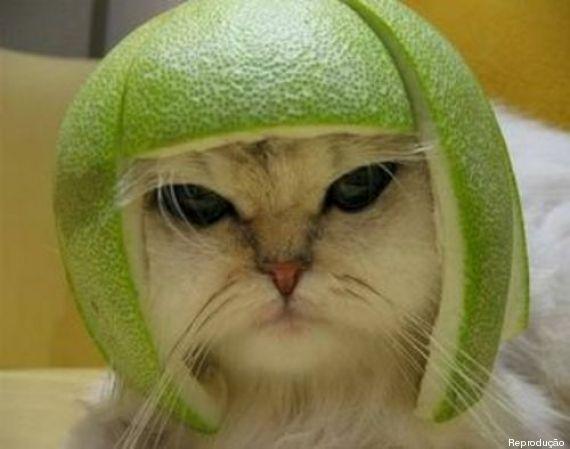 gato com limão