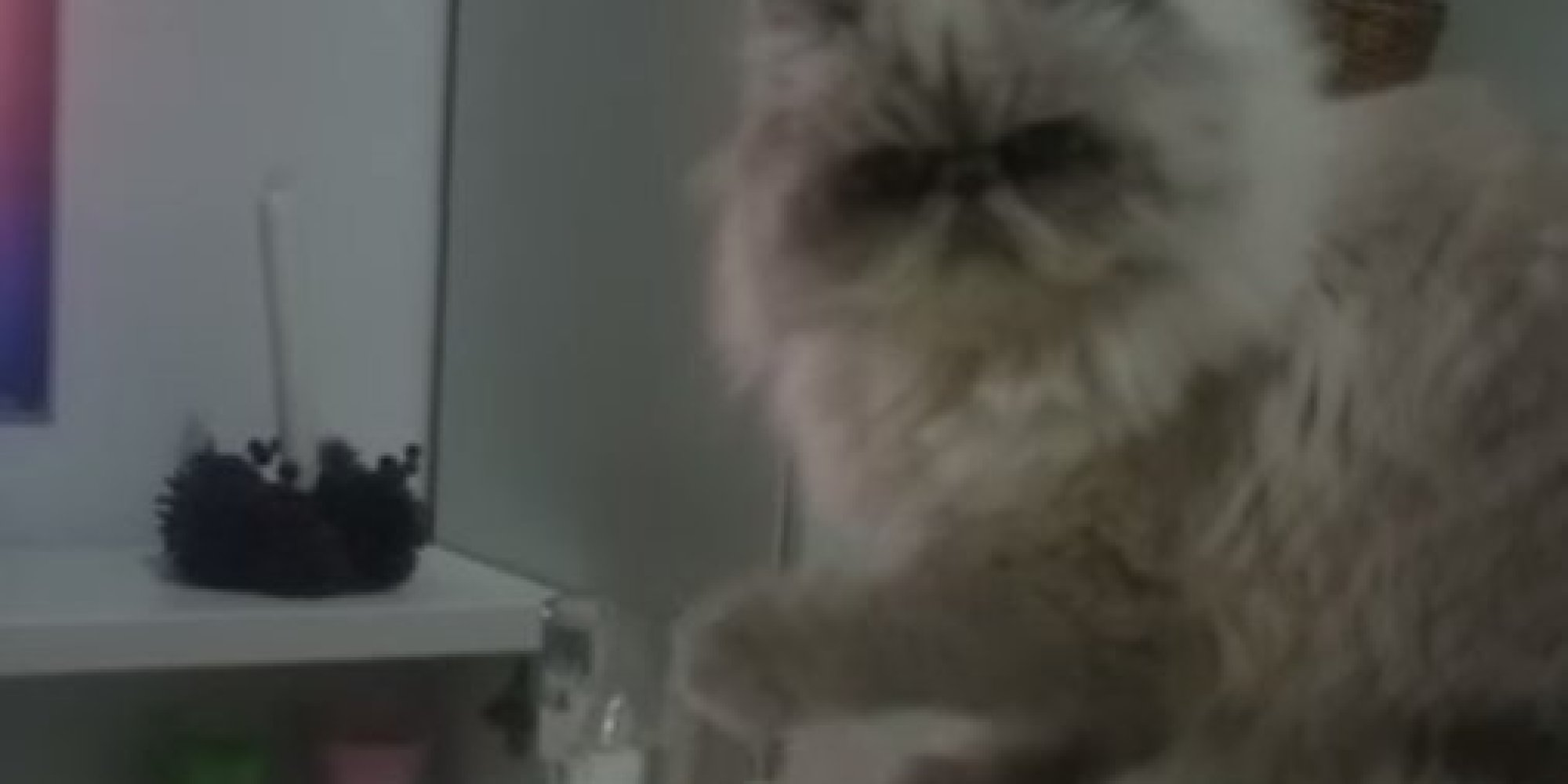 Cat Pushes Glass Off Table Video