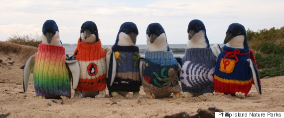 penguins in tiny sweaters
