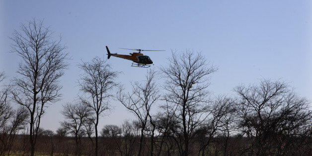 In this photo taken Thursday, Nov. 20, 2014 a helicopter hovers over an area to dart a rhino near Skukuza, South Africa. After darting the animal skin and blood samples are taken, and a  microchip is attached before being transported by truck to an area hopefully safe from poachers. Kruger National Park has conducted about 45 such captures since last month, as part of a plan to create a stronghold within the country's flagship reserve where rhinos will get extra protection from poachers, many of