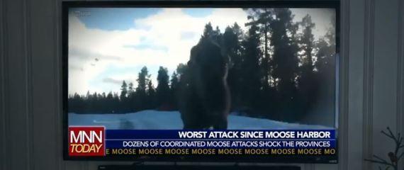 canadian sniper moose