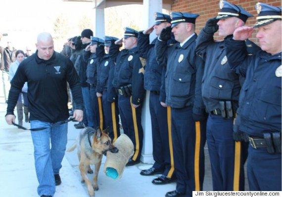 judge police dog