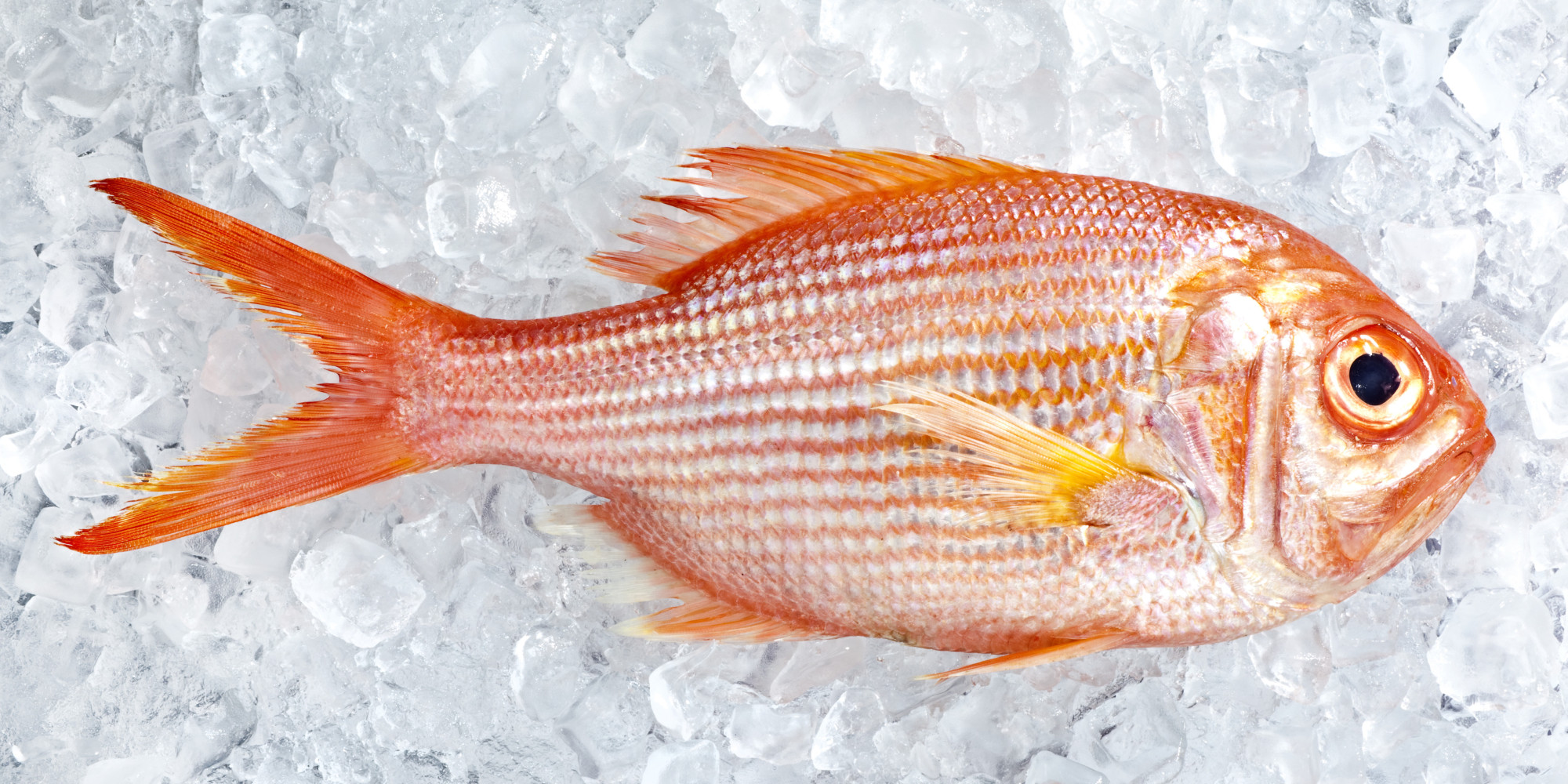 How Long Does Fresh Fish Last In The Fridge After You Buy ...
