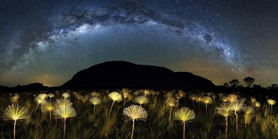 marcio cabral paepalanthus galactic