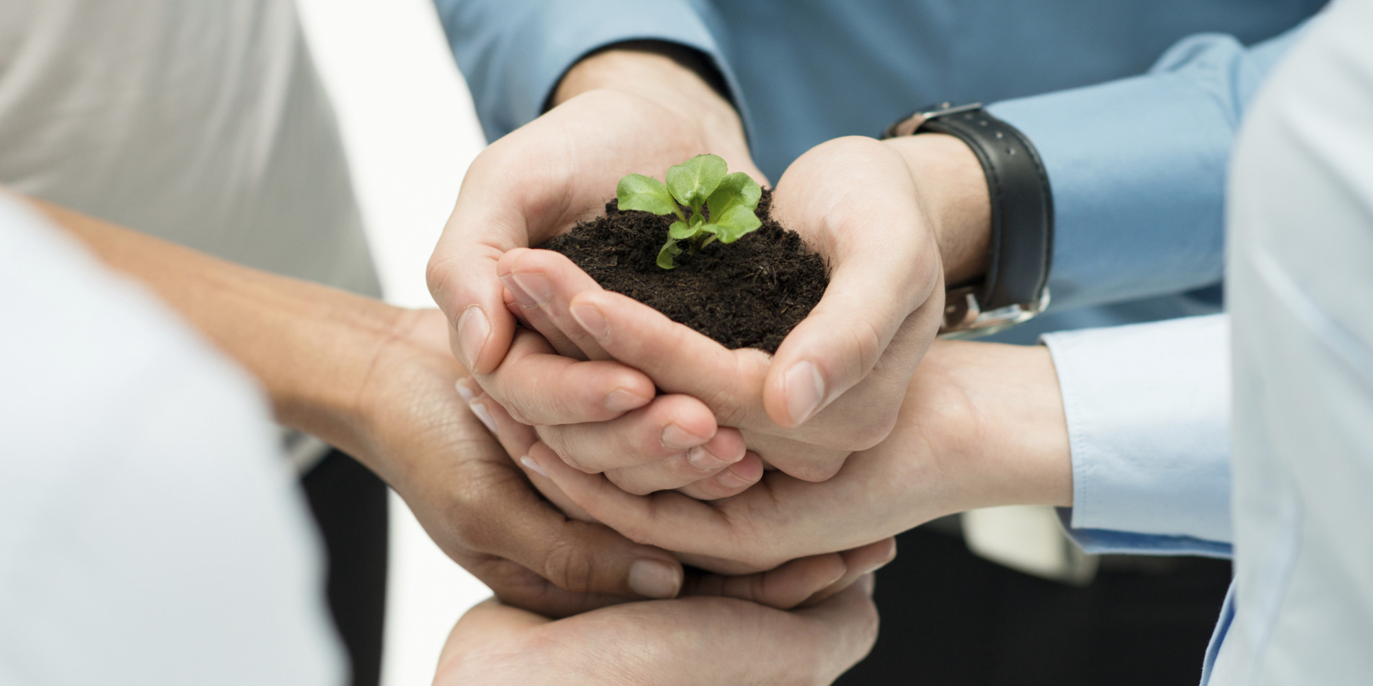 Image result for work team holding plant to grow